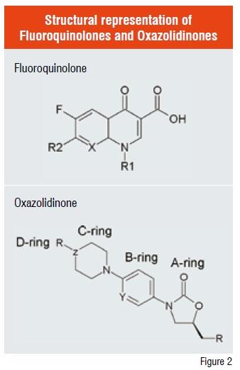 Structural representation of Fluoroquinolones and Oxazolidinones