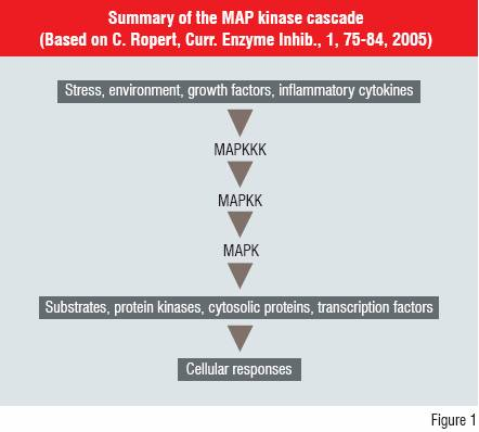 Figure 1:Summary of the MAP Kinase Cascade (Based on C. Ropert, Curr. Enzyme Inhib., 1,75-84,2005)