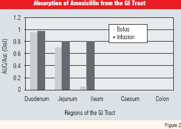 absorption of amoxicillin from the GU tract