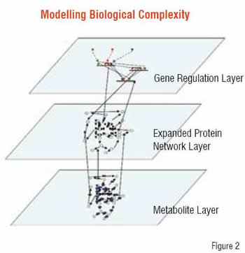 Modelling Biological Complexity