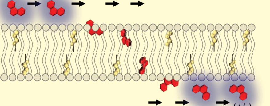 How to Study Drug Transport at Biological Interfaces